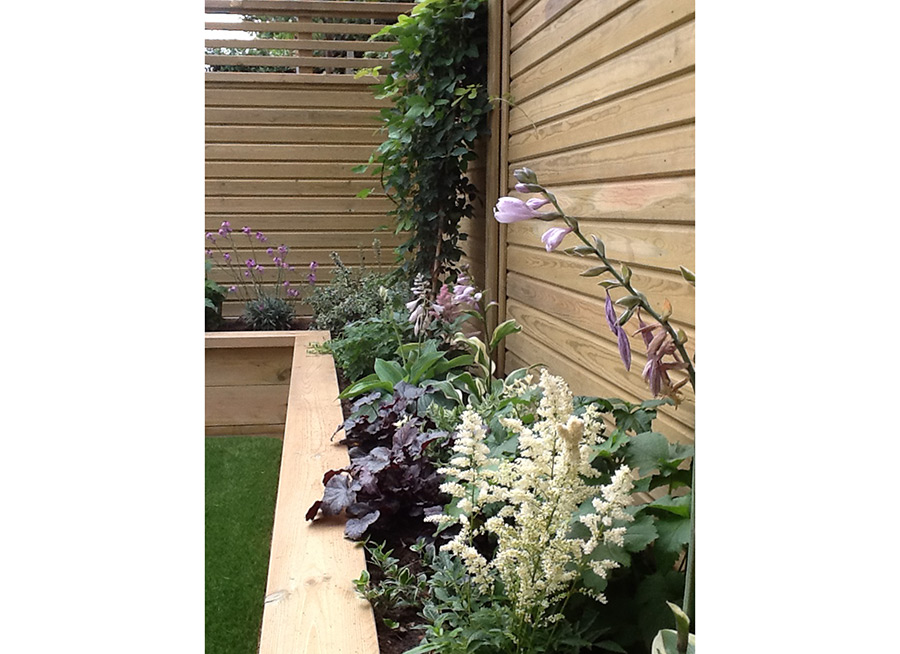 Medium Sized Family Garden in Balham