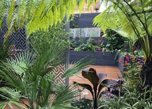 Small Tropical Garden Earlsfield 1